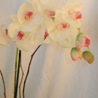 """22"""" Silk Ivory and Pink Phalenopsis Orchid Arrangement"""