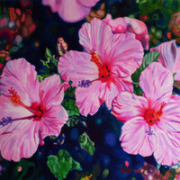 "Giclee print on canvas, matted - Hibiscus - 8"" x 10""  - Signed/Editioned"