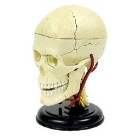 Elenco 3D DIY Brain Anatomy With CD