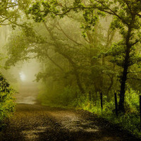 Misty Woodland Lane Art Print by John Dunbar | Society6