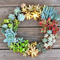 DIY Gorgeous Succulent Wreath | Shelterness