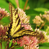Digital 8x10 Country Yellow Butterfly and Flower Semi-Gloss Print. Wall Art, Home Decor photograph taken with my Full HD, 12 MP Canon Camera