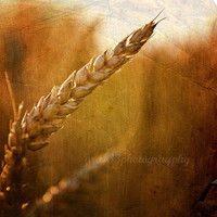 "Rustic Photography - 5x5 inch Photograph - ""Evening Harvest"""