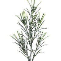 Package of 12- Artificial Snowy Holiday Evergreen Podocarpus Picks - Perfect for Winter Floral Arrangements, Weddings, and Any Winter Decor!