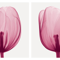 Tulips [Positive] Art Print by Steven N. Meyers at Art.com