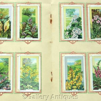 Wild Flowers Full Set of 48 Original Cigarette Cards in Official (Park Drive) Album by Gallaher Ltd Issued in 1939 (ref: 3091)