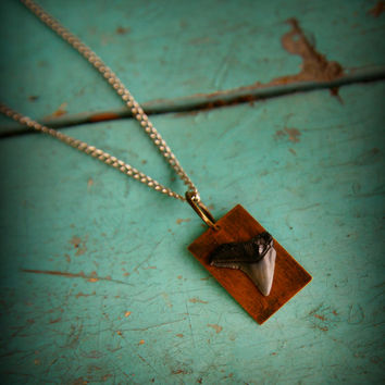 Real fossilized shark tooth necklace