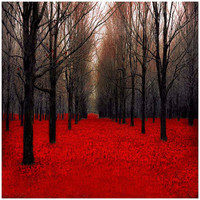 Forest Photography, Dark, Red Home Decor, Vampires Gothic halloween forest in Fall decor autumn colors, 12x12