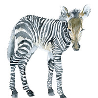 Baby Zebra Watercolor Painting - 8 x 10 - Giclee Print - 8.5 x 11 - African Animal Art