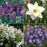 Blue & White All Season Collection, Tulips, Daffodils, Phlox  – Collections from American Meadows