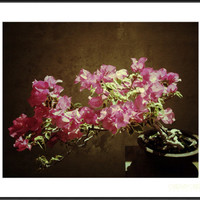 The Bonsai - Fine Art Floral Photography Print