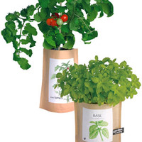 Garden-in-a-Bag: Grow your own culinary herbs indoors