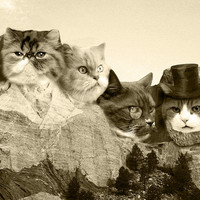 """Meowmore, Cat Poster 18"""" x 24"""""""