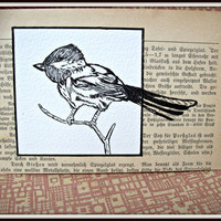 bird ink drawing postcard