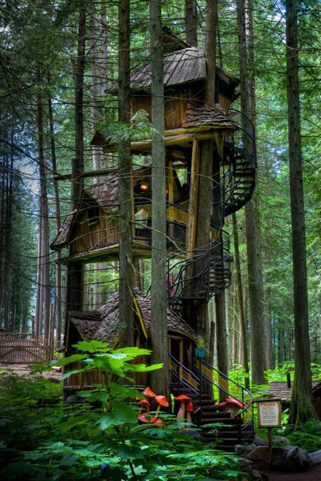 Tree House