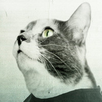 Anthropomorphic Cat, Fine Art Print, Calico, Surreal Photograph, Halloween Decor, 8x10 Mint Green