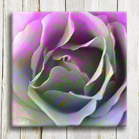 "Floral giclee art print . Purple rose.  12""/12"". 30/30 cm"