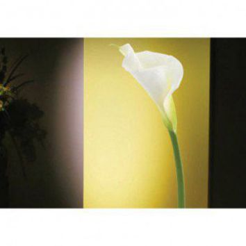 ADZif Foto Calla Lily Wall Decal - F1110 - All Wall Art - Wall Art & Coverings - Decor