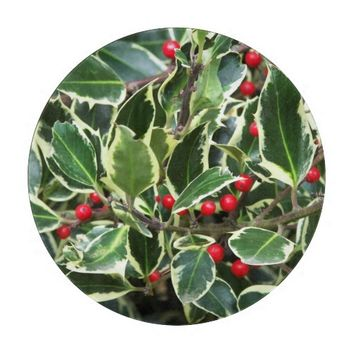 Holly Berry Holiday Round Glass Cutting Board