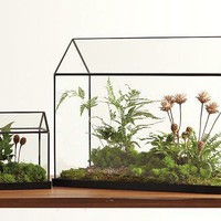 Glass Greenhouse ? ACCESSORIES -- Better Living Through Design