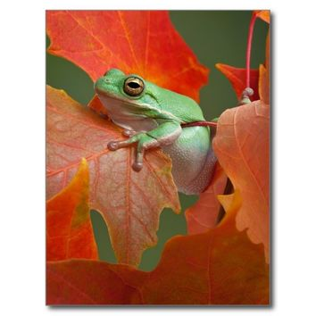 Green Tree Frog In Fall
