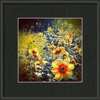 September Blum  Framed Print By Alexandra Cook