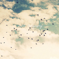 "Birds Flying Photo. Birds. Sky. Clouds. Cloudy. Dreamy. Blue. White. Gray. Summer. ""Summer Flight"". 8x8 inch photo. art. print. home decor"