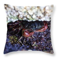 "Timid Crab 14"" x 14"" Throw Pillow for Sale by Priya Ghose"