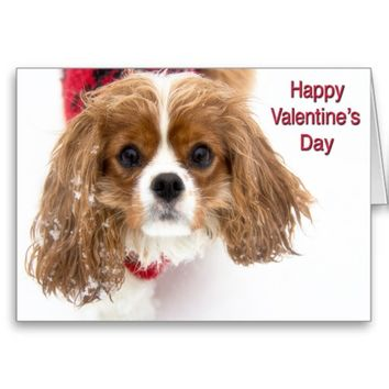 Happy Valentine's Day Sowny Cavalier King Charles