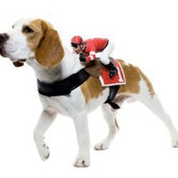 Jockey Pet Halloween Costume
