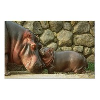 Love You Mom Hippopotamus Portrait Posters from Zazzle.com