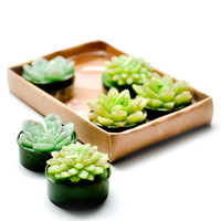 Succulent Tealight Set | LEIF