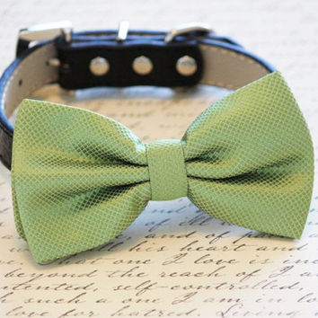 Grass Green Dog Bow tie attached to  Black Leather Collar, Spring wedding dog accessory, Spring wedding dog accessory