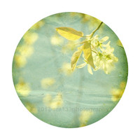 "Yellow and Mint Home Decor, Nature Photograph, Shabby Chic Home Decor- 8x10 inch Print - ""Eponine"""