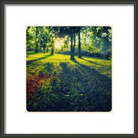 The Scenes Of Our Life  Framed Print By Alexandra Cook