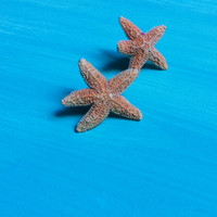 sugar starfish stud earrings
