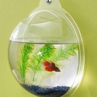 Wall Fish Bowl - Opulentitems.com