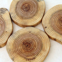 a slice of cedar natural wood coasters from fallen by thewoodlot