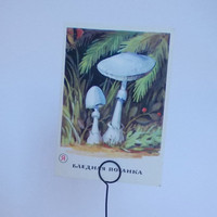 Vintage Mushroom Series (Death cup) Print - 1975, Aurora Art Publishers