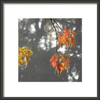 Leaves  Framed Print By Alexandra Cook