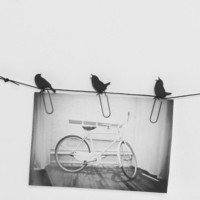Birds on a Wire Photo Clip - Set of 8