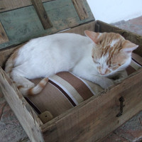Authentic French Crate Cat / Dog Bed