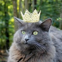 Royal Cat Crown - Holidays Cat Crown