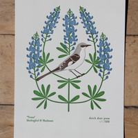 texas (from birds and blooms of the 50 states)