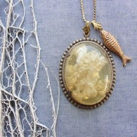 The Wonder Cabinet Collection  Seaweed and Fish by staroftheeast