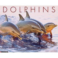 Dolphins 2013 Wall Calendar: Willow Creek Press: 9781607555506: Amazon.com: Books