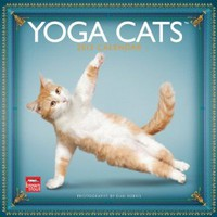Yoga Cats 2013 Square 12X12 Wall Calendar (Multilingual Edition): BrownTrout Publishers: 9781421697437: Amazon.com: Books