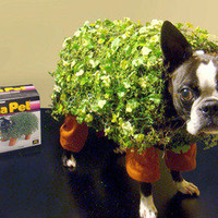 Turn Your Dog into a Chia Pet for Halloween | materialicious