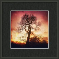 A Tree Framed Print By Alexandra Cook