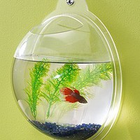Wall Mount Fish Bowl Aquarium Tank Beta Goldfish